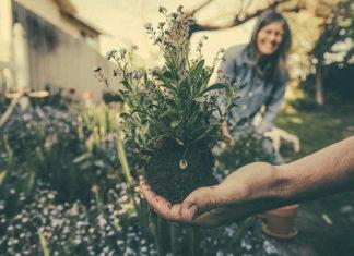3 rzeczy na które należy zwrócić uwagę, przesadzając kwiaty doniczkowe