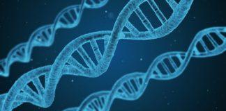 dziedziczenie genów