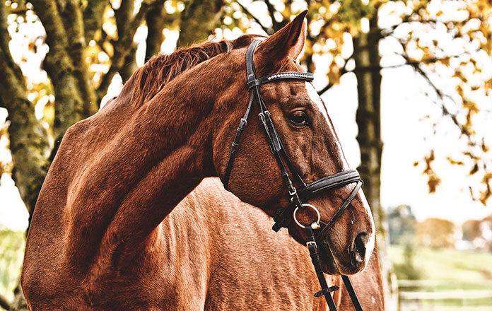Co powinna zawierać dobra pasza dla koni?