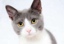 bezzbożowe karmy dla kota