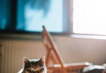 Zbilansowana dieta dla kota i psa